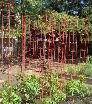 Sturdy power-coated tomato ladders in red color support tomato seedling