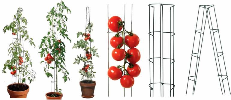 Six type of different shape tomato ladders