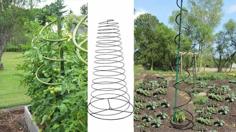 Twisted spiral tomato supports made from galvanized and power-coated steel in green or black color